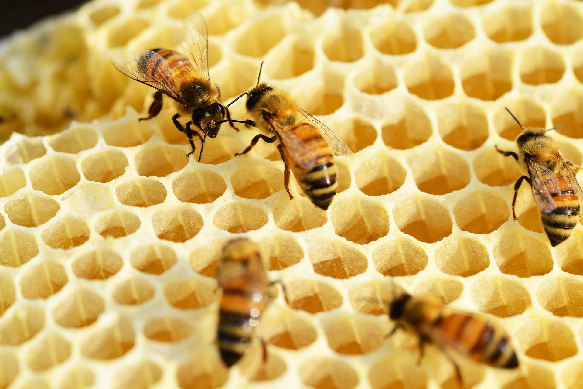 honeycomb-structure-organization-min